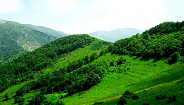 Arasbaran Forest