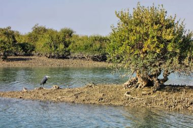 Mangrove forests of Qeshm (Hara Forest)